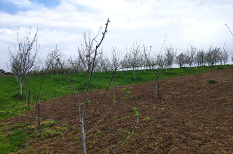 Počele pripreme za popis poljoprivrede, ratari skeptični