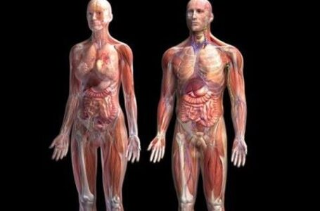 Fascinantne stvari o ljudskom organizmu koje možda niste znali